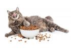 Сухие корма для кошек (206)