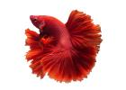 Рыбы и рептилии (849)